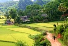 paysages-du-cambodge